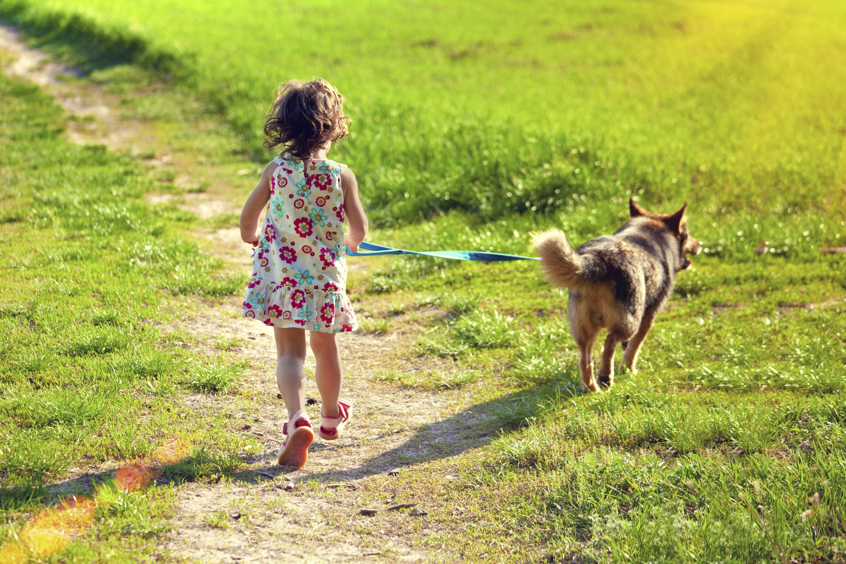 dog walking business plan Learn the basics of starting a dog walking business discover important legal considerations involved in starting a dog walking company, including permits and liability.